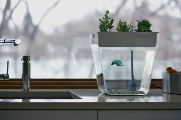 aquafarmfishtank
