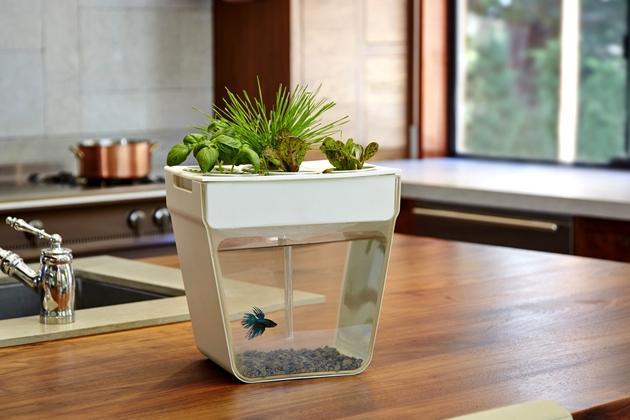 fish tank herb garden