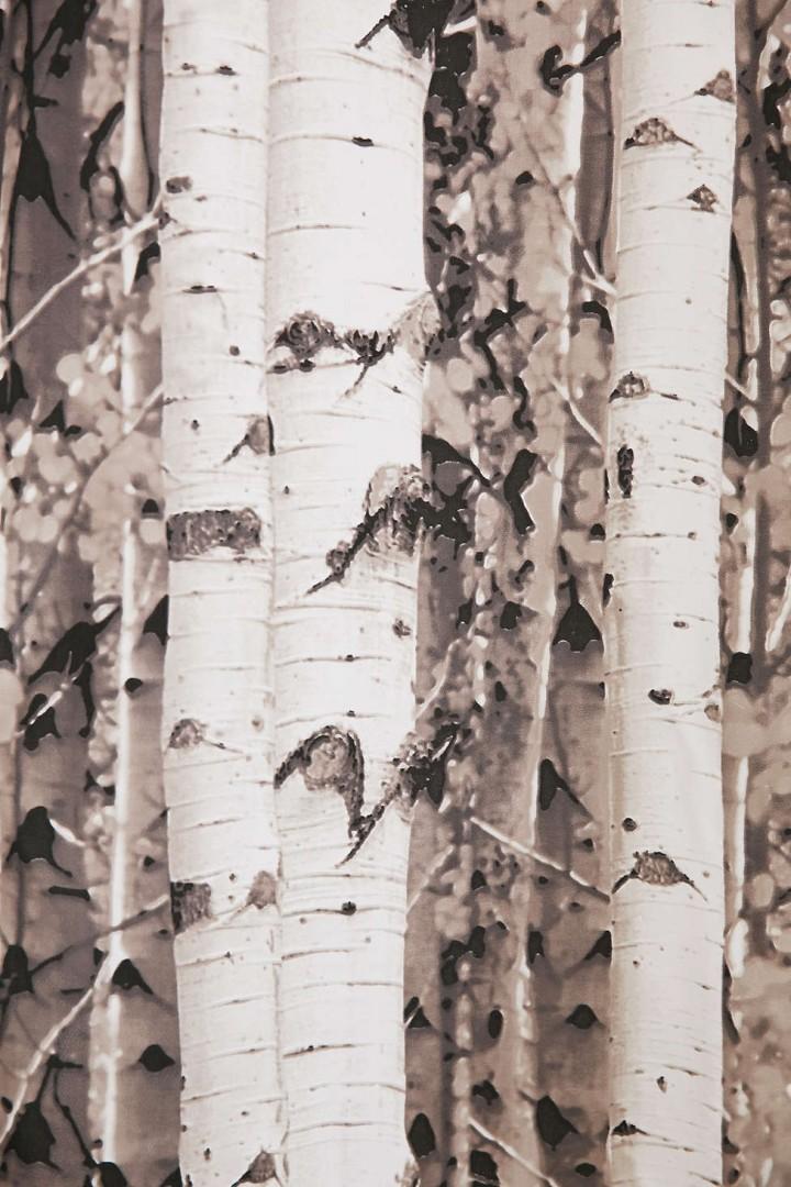 ... Birch Tree Shower Curtain Closeup